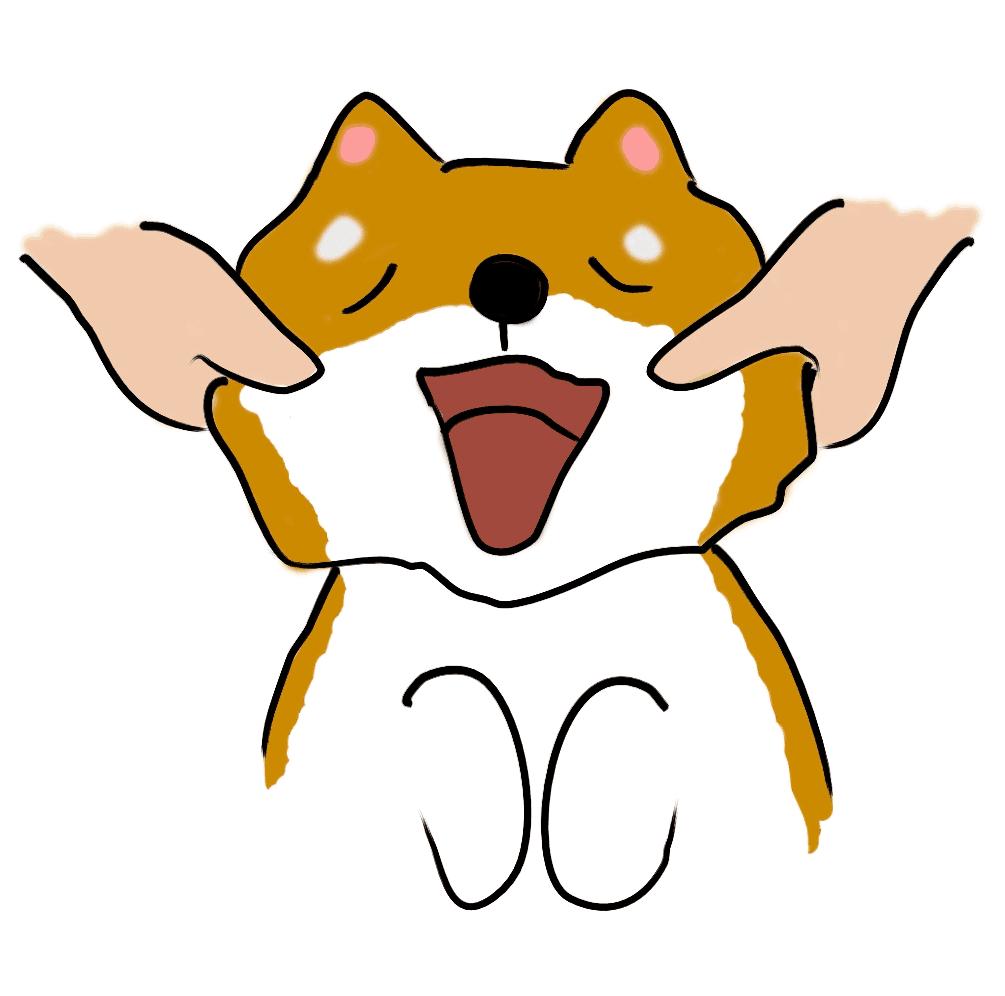 柴犬の顔マッサージ